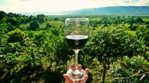 wine-2173239_960_720